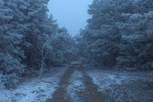 Road to the frozen foggy pine forest