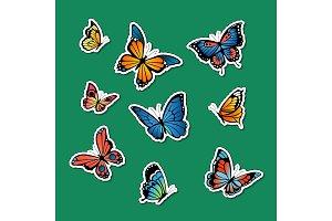 Vector decorative colored