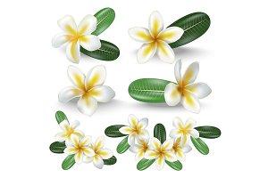3d Frangipani Flowers Set. Vector