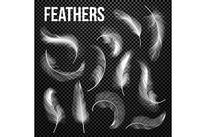 Feathers Set Vector. Different