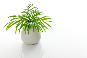 Green palm leaves in a white vase
