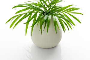 Parlor palm leaves in a white vase