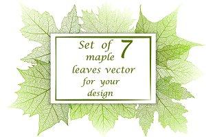 Set of skeleton maple leaves.