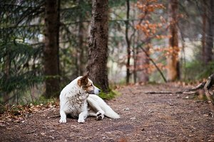 Wild lonely white dog in forest at C