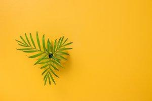 Palm leaves in a vase on a joyful bg