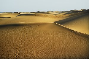 sandy dunes in  Maspalomas beach