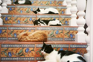 many cats in the tiled stair