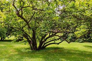 Bush tree on grass lawn
