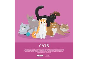 Cats Breeds Flat Vector Web Banner