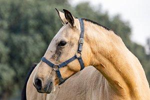 Beautiful horse in the countyside