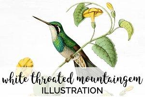 Hummingbird Mountaingem Watercolor
