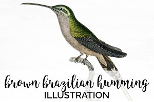 Humming Bird Brazilian Vintage