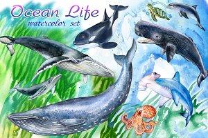 Life in the Оcean