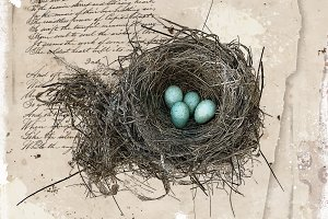 Robin's Nest - Sepia Edition