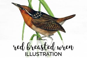 Wren Red Breasted Bird Vintage