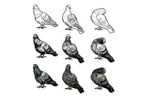 Set of pigeons