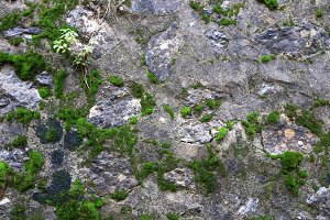 Rocky stone wall with moss texture
