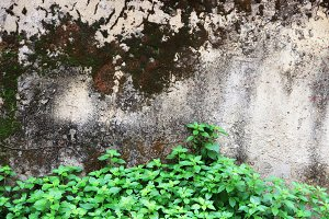 Rocky stone wall with moss