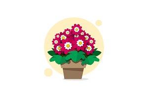 Beautiful spring flowers of
