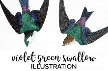 Swallow Violet-Green Birds Vintage