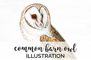 Barn Owl Vintage Watercolor Bird