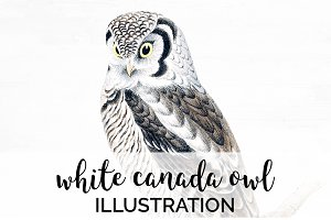 Owl White Canada Vintage Watercolor
