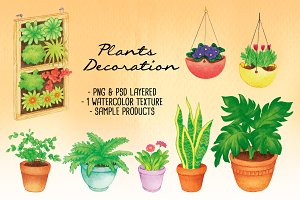 Plants Decoration