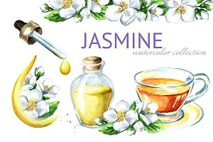 Jasmine. Watercolor collection