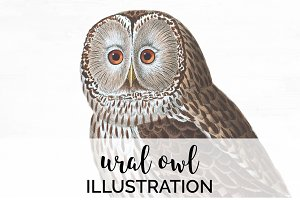 Ural Owl Vintage Watercolor Birds