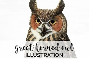 Great Horned Owl Vintage Bird