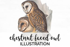 Owl Chestnut-Faced Watercolor Birds
