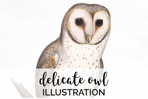 Delicate Owl Vintage Watercolor Bird