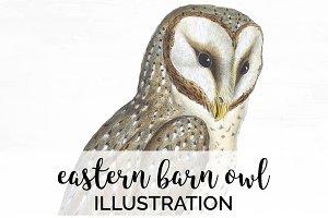 Barn Owl Eastern Watercolor Birds