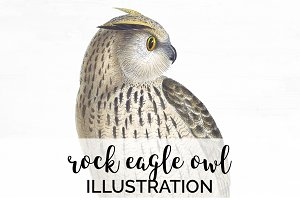 Owl Rock Eagle Vintage Birds