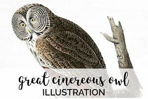Owl Great Cinereous Owl Vintage Bird