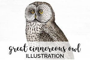 Cinnereous Owl Vintage Watercolor
