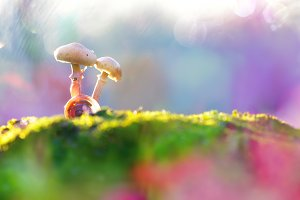 two mushrooms and snail shells