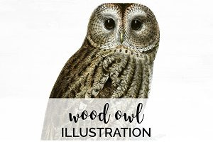Vintage Birds: Scullys Wood-Owl