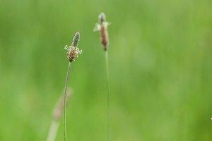 Summer green grass
