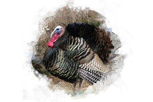 Turkey Thanksgiving Illustration