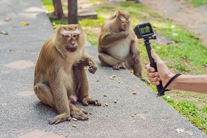 A man takes a picture of a monkey on