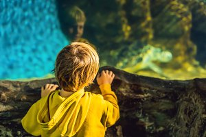 boy watching a sea turtle in an