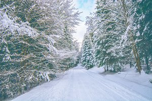Snowy forrest road during the winter