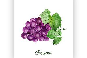 grapes. watercolor painting