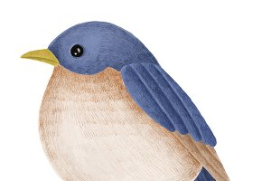 Hand-drawn Tickell's Blue Flycatcher