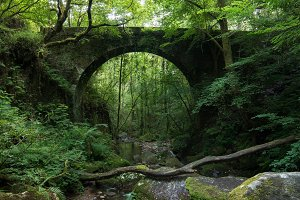 Old stone bridge hidden in the fores