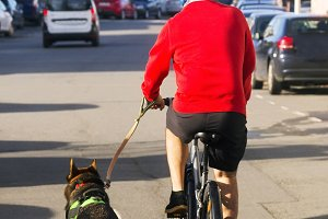 biking and cycling with dog