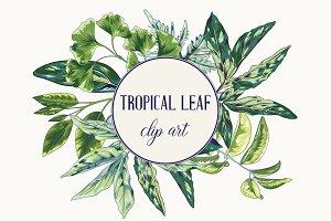 Tropical Leaf Clip Art