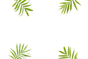 Green palm leaves isolated Floral
