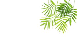 Green palm leaves white background